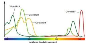 Spettri assorbimento clorofille carotenoidi