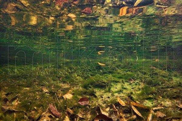Fotografia subacqua