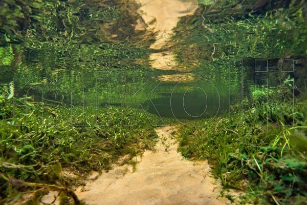 Giardino subacqueo