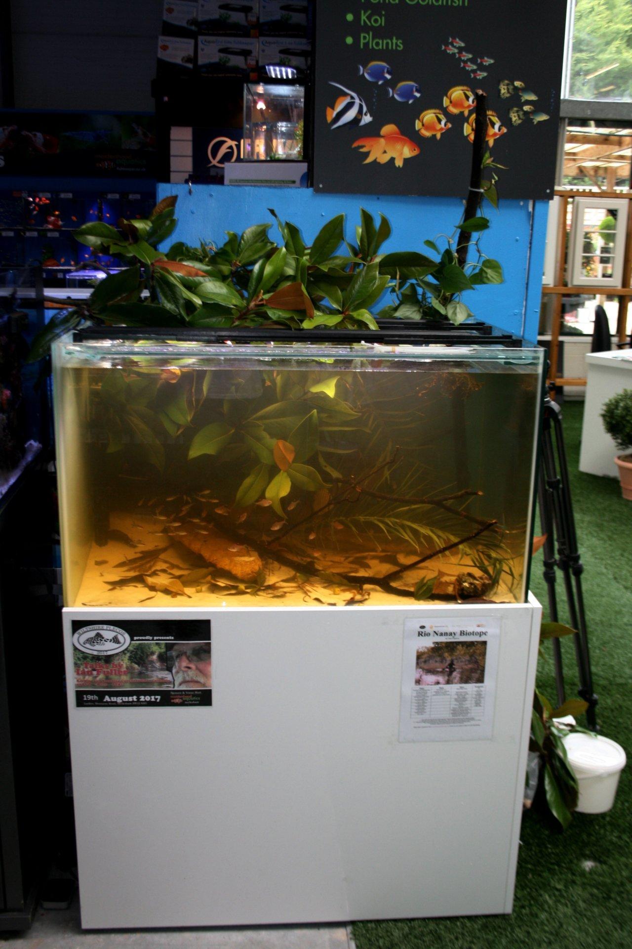 Allestimento biotopo Rio Nanay