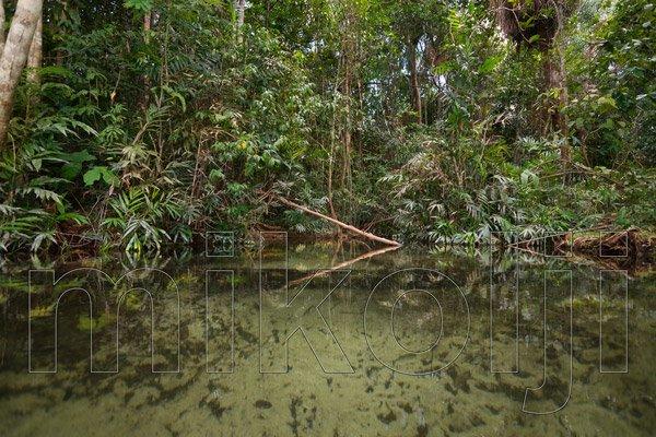Corso d'acqua chiara nella foresta amazzonica