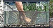Creazione di un acquario wild