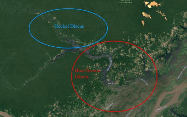 Habitat discus