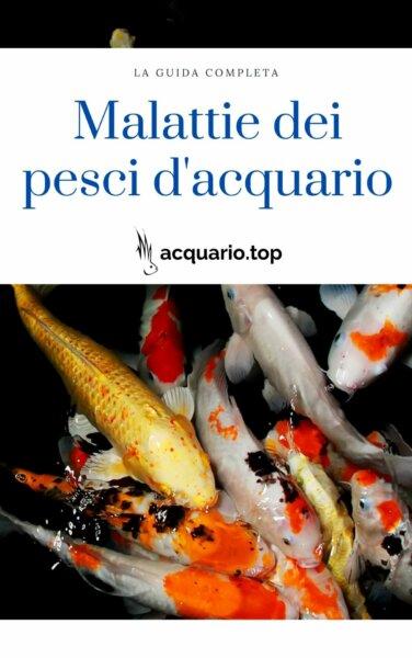 Malattie pesci acquario